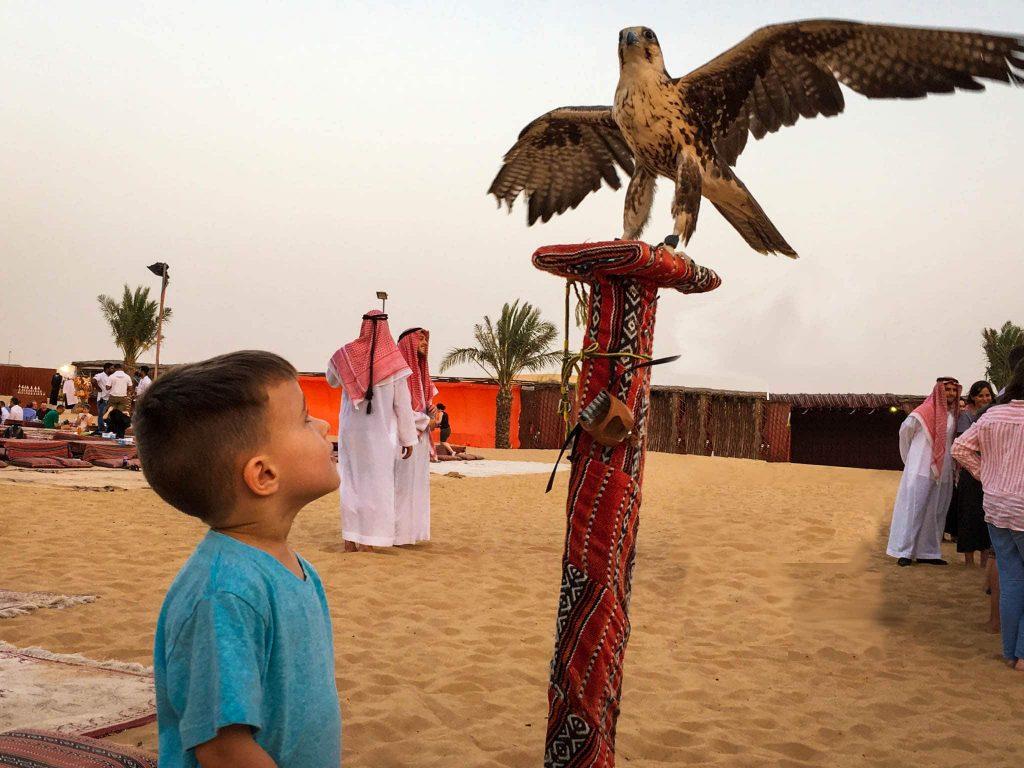 Desert Safari - Abu Dhabi Travel
